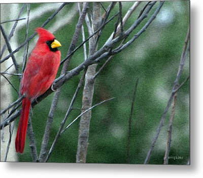 Cardinal West Metal Print by Jeff Kolker