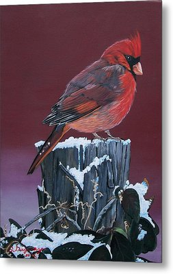 Cardinal Winter Songbird Metal Print by Sharon Duguay