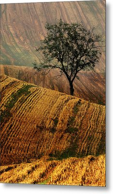 Carpet Fields Of Moravia Metal Print by Jaroslaw Blaminsky