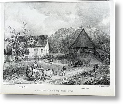 Carting Canes To The Mill Metal Print by British Library