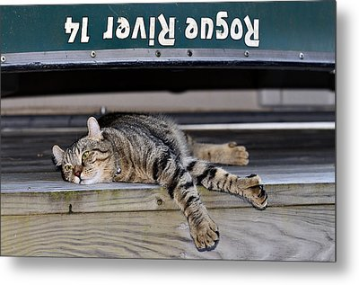Cat And A Canoe Metal Print by Susan Leggett
