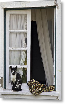 Cat Sitting On The Ledge Of An Open Wood Window Metal Print by David Letts