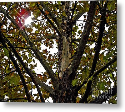 Catch My Glow Metal Print by Diana  Tyson