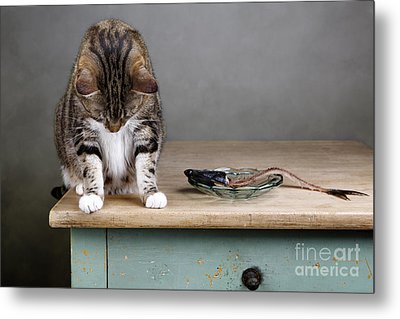 Caught In The Act Metal Print by Nailia Schwarz