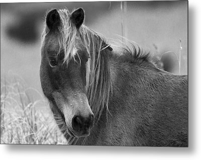 Caught My Eye Metal Print by Betsy Knapp