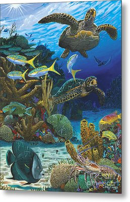 Cayman Turtles Re0010 Metal Print by Carey Chen
