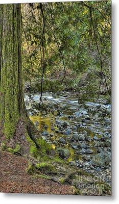 Cedar Tree By Kanaka Creek Metal Print by Sharon Talson