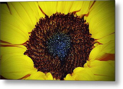 Center Of A Sunflower Metal Print by Cynthia Guinn