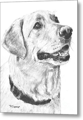 Charcoal Drawing Yellow Lab In Profile Metal Print by Kate Sumners