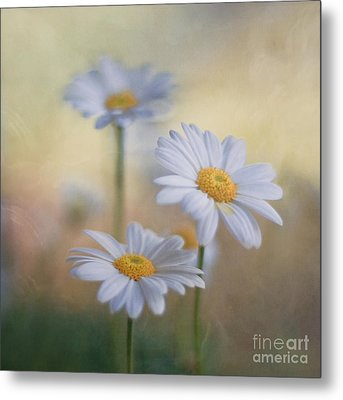 Charites Metal Print by Maria Ismanah Schulze-Vorberg