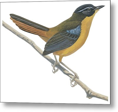 Chat Thrush  Metal Print by Anonymous