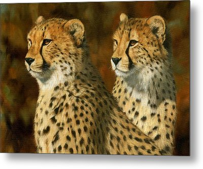 Cheetah Brothers Metal Print by David Stribbling