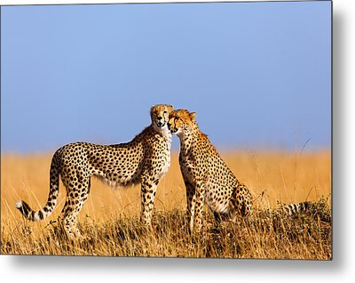 Cheetah Mother With Daughter Masai Mara Metal Print by Maggy Meyer