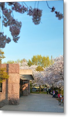 Cherry Blossoms 2013 - 021 Metal Print by Metro DC Photography