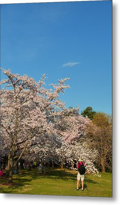 Cherry Blossoms 2013 - 029 Metal Print by Metro DC Photography