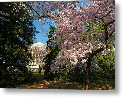 Cherry Blossoms 2013 - 047 Metal Print by Metro DC Photography