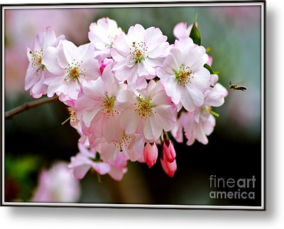 Cherry Blossoms And A Bee Metal Print by Patti Whitten