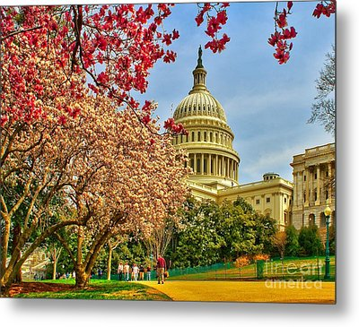 Cherry Blossoms At The Capitol Metal Print by Nick Zelinsky