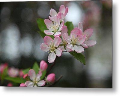 Cherry Blossoms - Washington Dc - 0113110 Metal Print by DC Photographer