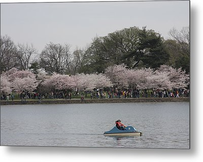 Cherry Blossoms - Washington Dc - 011314 Metal Print by DC Photographer