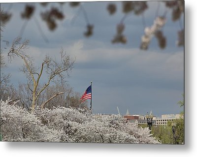 Cherry Blossoms - Washington Dc - 011381 Metal Print by DC Photographer