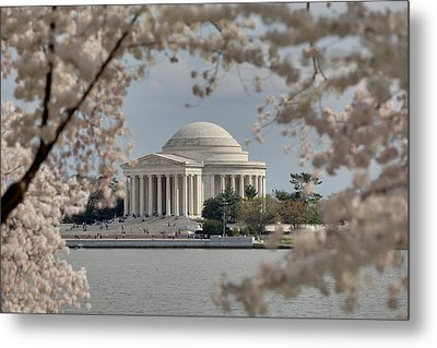 Cherry Blossoms With Jefferson Memorial - Washington Dc - 011324 Metal Print by DC Photographer