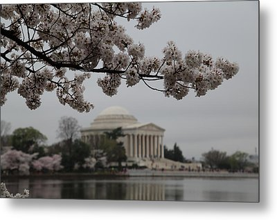 Cherry Blossoms With Jefferson Memorial - Washington Dc - 011345 Metal Print by DC Photographer