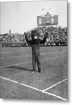 Chicago Bears Mascot In Front Of Wrigley Field Scoreboard Metal Print by Retro Images Archive