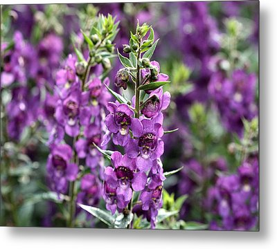 Chicago Botanical Gardens - 56 Metal Print by Ely Arsha