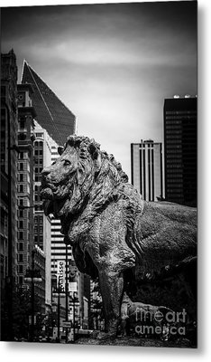 Chicago Lion Statues In Black And White Metal Print by Paul Velgos