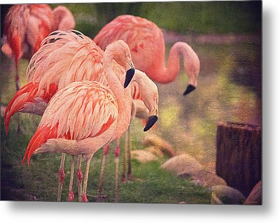 Chilean Flamingos  Metal Print by Maria Angelica Maira