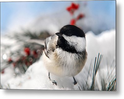 Chilly Chickadee Metal Print by Christina Rollo