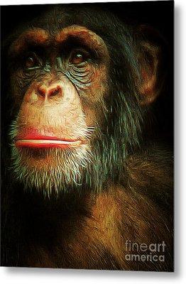 Chimp 20150210brun V3 Metal Print by Wingsdomain Art and Photography