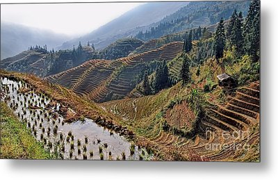 Chinese Rice Terraces Metal Print by Alexandra Jordankova