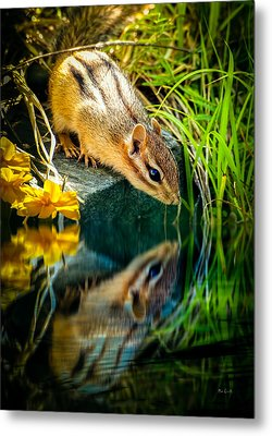 Chipmunk Reflection Metal Print by Bob Orsillo