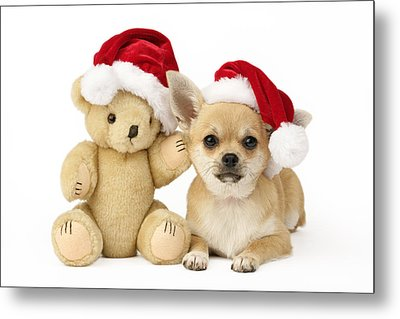 Christmas Dog And Teddy Metal Print by Greg Cuddiford