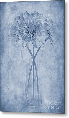Chrysanthemum Cyanotype Metal Print by John Edwards