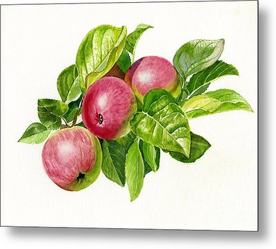 Cider Apples With White Background Metal Print by Sharon Freeman