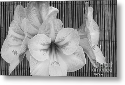 Classic Lilies Metal Print by Greg Patzer