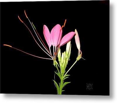 Cleome Metal Print by J R Baldini Master Photographer