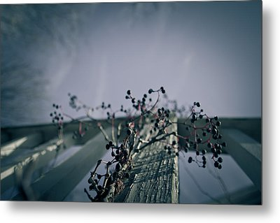 Cling To You Metal Print by Shane Holsclaw