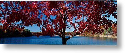 Close-up Of A Tree, Walden Pond Metal Print by Panoramic Images