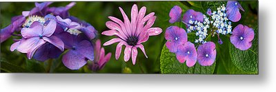 Close-up Of Purple Passion Flowers Metal Print by Panoramic Images