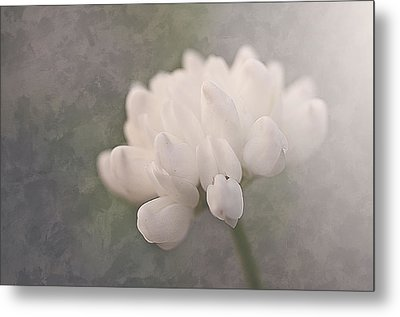 Clover In White Metal Print by Faith Simbeck