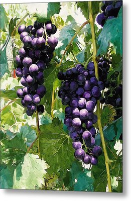 Clusters Of Red Wine Grapes Hanging On The Vine Metal Print by Lanjee Chee