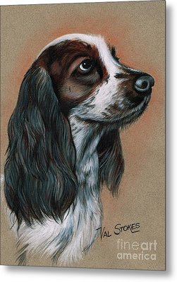 Cocker Spaniel Metal Print by Val Stokes