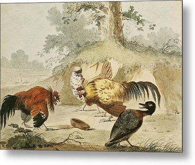 Cocks Fighting Metal Print by Melchior de Hondecoeter