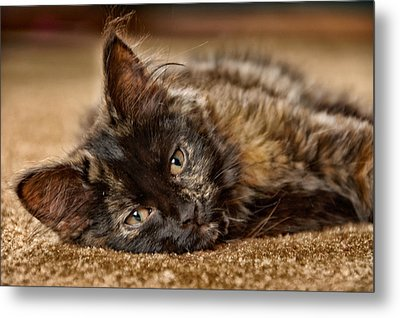Coco Kitten Metal Print by Trever Miller
