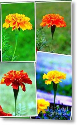Collage Of Marigolds Metal Print by Judy Palkimas