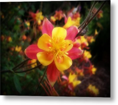 Color Burst Metal Print by Heather L Wright